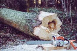 Een boom afgezaagd in het bos