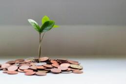 Een groeiend takje tussen een hoop geld